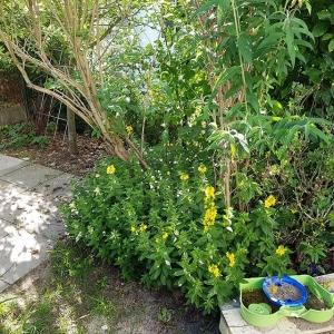 Der Garten wächst langsam zu. Läuft