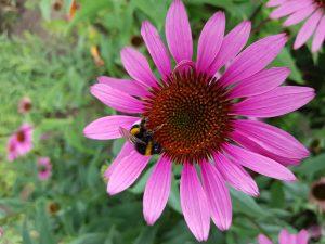 Bienenfleissig
